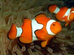 Reef-Keeper-ZN