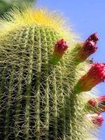 Andi Cactusa