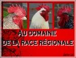 domaine la race régionale