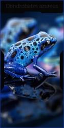 R.D.V Azul