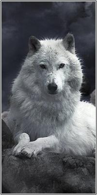 Zakiel Snow
