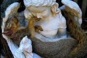 écureuil bras ange