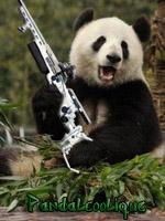 Pandalcoolique