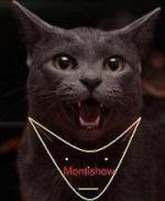Montishow