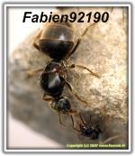 fabien92190