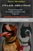 Staff_Prestige