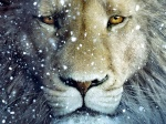 Arslan Lion