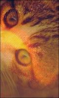 Etoile de l'Aigle