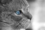 Kittykat1
