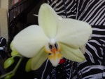 OrchiJeff