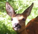 Redaktion Jagd und Wald