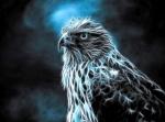 -Hawk-™