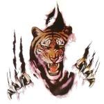 Tigerscar