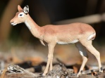kudu11