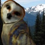 loving_owlets