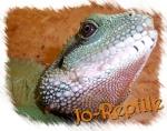jo-reptile