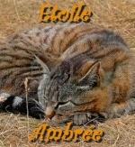 Etoile Ambrée