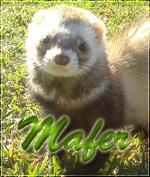 Mafer