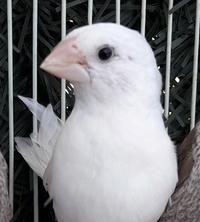 Pedro.F