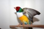 birdy77