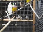 Pauline passion d'oiseaux