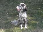 Les chiens 13495-34