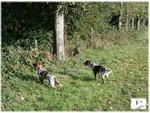 Les chiens 16585-80