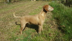 Les chiens 5901-98