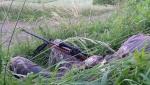 Armes de chasse 7376-15