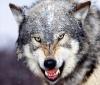 WolfireX