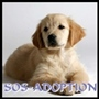 sos-adoption