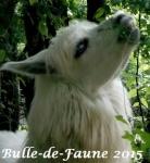 Bulle-De-Faune
