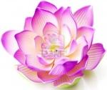 fleurdelotus