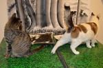 Fivecats