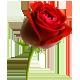 إنشاء قسم خاص بالباكالوريا - صفحة 2 13876