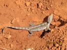 Prospecting_Australia