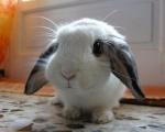 BunnyWizard