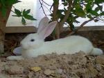 m.rabbit