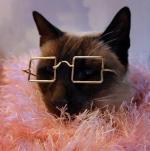 Lady Gato >^..^<
