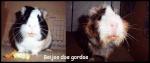 Floquinho&Teddy