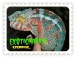exoticmadrid
