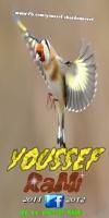 chardonneret-youssef