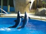 Autres questions aquariophiles (non éthique) 4463-58