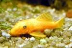 Autres questions aquariophiles (non éthique) 5302-37