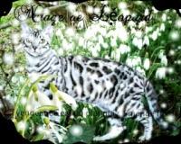 Nuage du Leopard