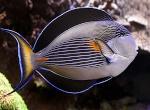 La Présentation de vos fishrooms (à partir de 2 bacs mini ou une batteries d'aquariums) 957-77