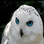 owlzombie