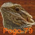 Pogo-79