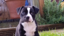 MICK-1st-STAFFY-LOLA