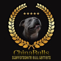 chinabulls staffords